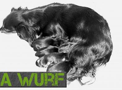 A-Wurf