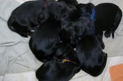 Heute sind wir, Edda, Elfie, Elvis, Emma und Ena, 3 Tage alt