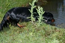 Unsere Mama Candis macht Pause am Teich 3 Tage nach Geburt
