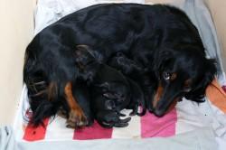 Wiff und wau - wir fünf neuen Hüggelzwerge sind heute geboren