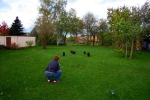 Übungsstunde Hüggelzwerge im großen Garten