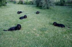 Heute üben alle großen Hunde im Garten auf Frauchen und Herrchen zu hören