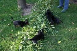 Ein aufregender Spielplatz im Garten bei den Hüggelzwergen