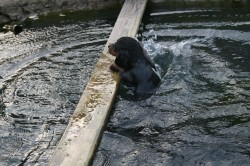 E-Wurf Dackel Welpe im Garten Teich