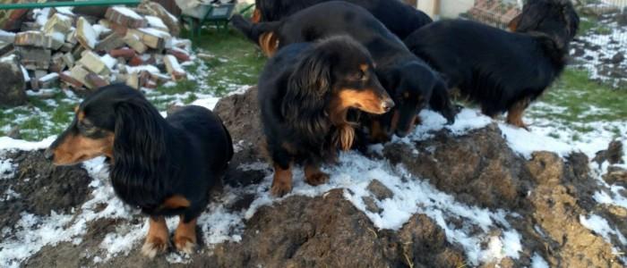 Alle Pfoten in den restlichen Schnee auf dem Hügel im Garten bei den Hüggelzwergen