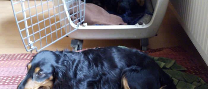 Basti wacht vor der Box im Wohnzimmer