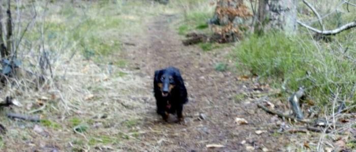 Spaziergang mit Bilbo von den Hüggelzwergen im Februar