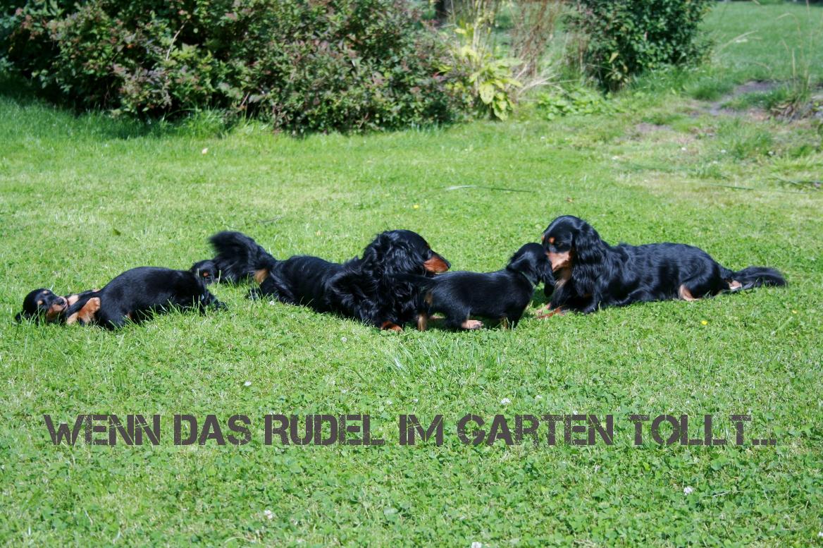 Hüggelzwerge Zucht Rudel Garten