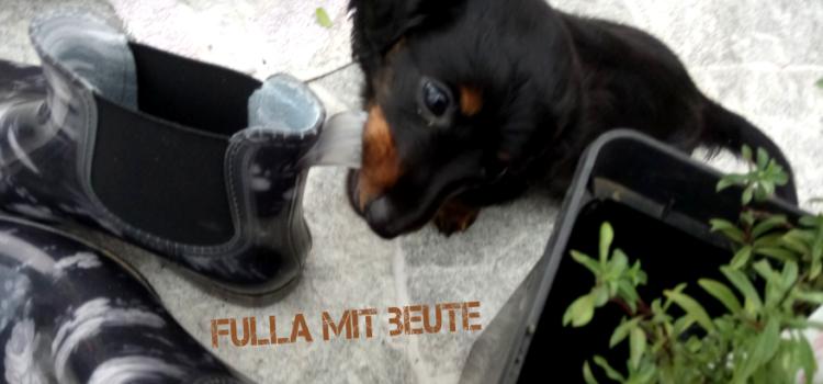 Video 4 – Fulla (Frieda) im neuen Heim