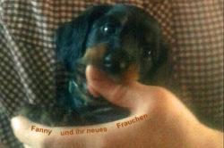 Dackel Hüggelzwerge Dackel Zucht F-Wurf Fanny neue Familie